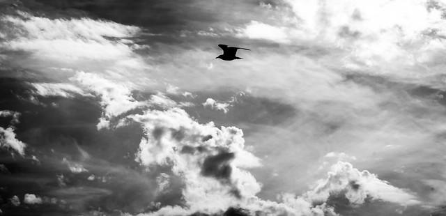 Cruising altitude 1