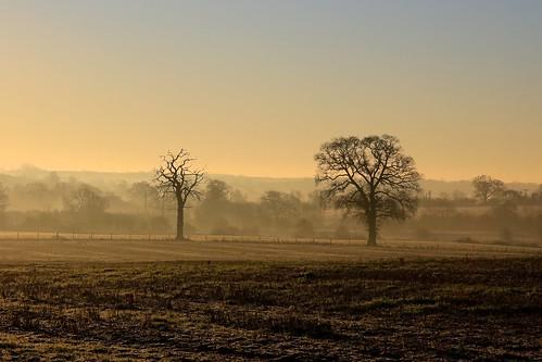 morning trees winter mist cold tree dawn frost december alba 2014
