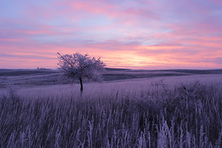 Erlenbusch Sunrise on a Frosty Morning | by USFWS Mountain Prairie