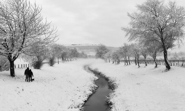 Tree line in snow (Explored  :-) )