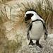 Are you Skipper the penguin?