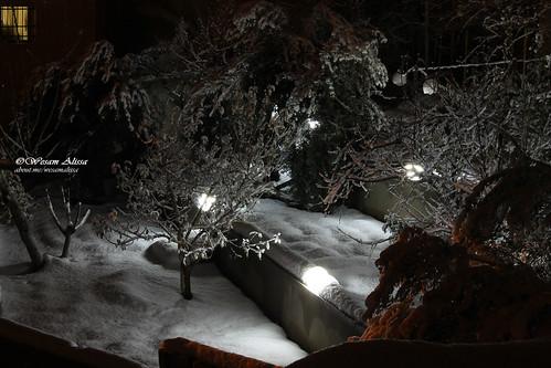 longexposure snow nature canon amman jordan dslr housegarden