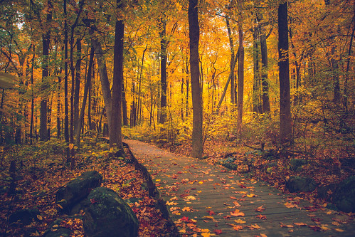 10kplus 10k hillsboroughtownship newjersey unitedstates us autumn northamerica somersetcounty sourlandmountain landscape hudsonjerseyhighlands thesourlands jerseyhighlands sourlandmountainpreserve hiking trail midatlantichighlands appalachianmountains northernusappalachians woods