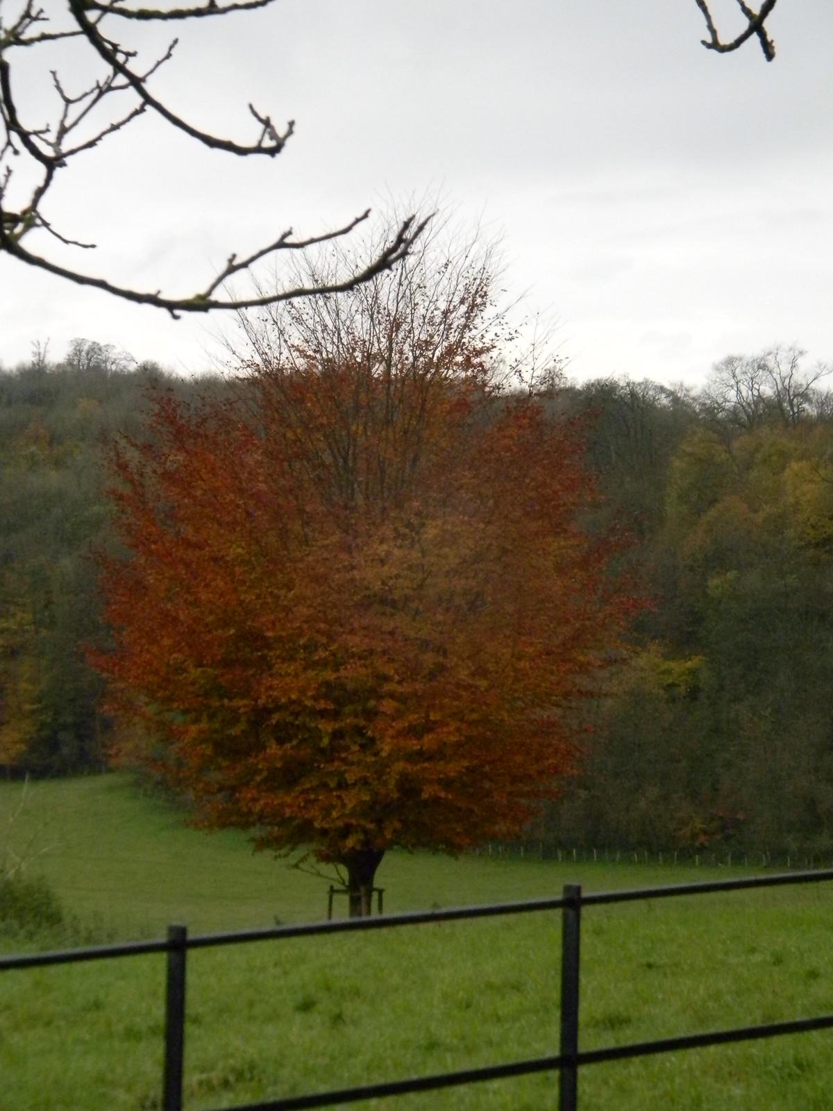 colourful tree Merstham to Tattenham Corner