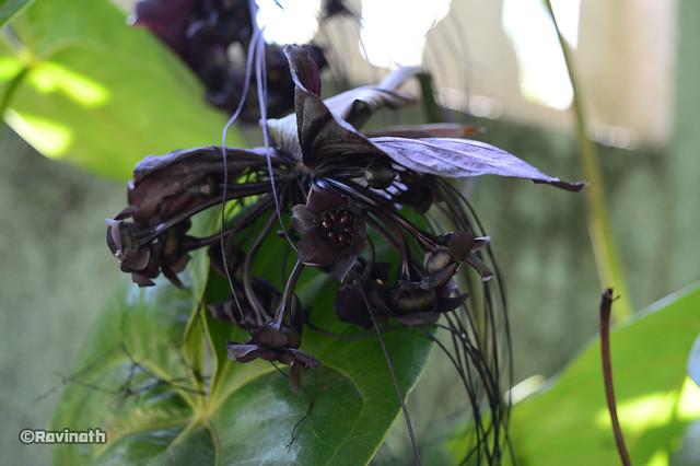 yaka flower