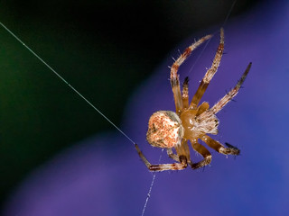 Spider | by rickmcnelly