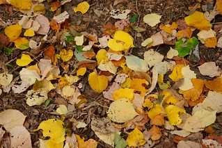 Ground Color in Fall