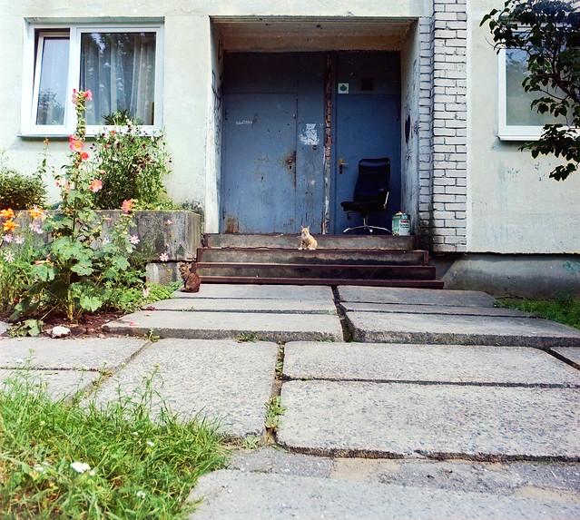 Cats of Riga