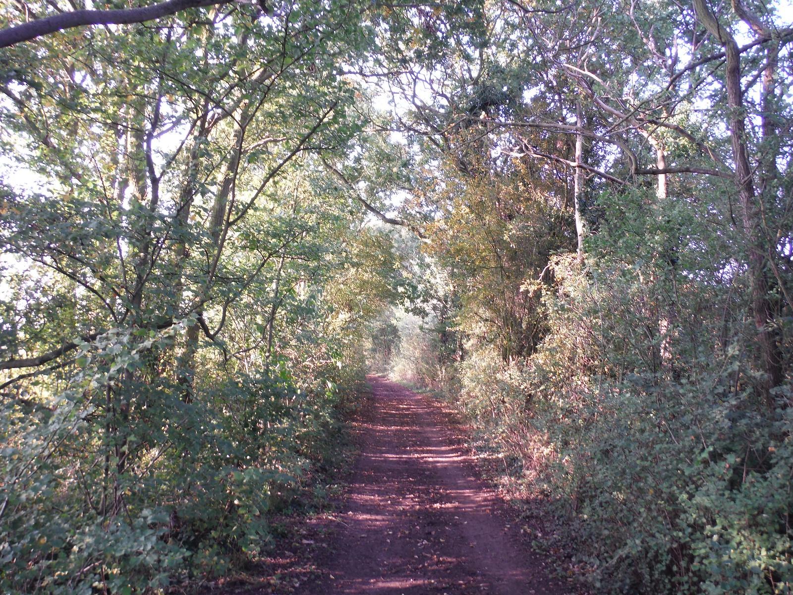 Charity Lane (Track) SWC Walk 159 South Woodham Ferrers to North Fambridge