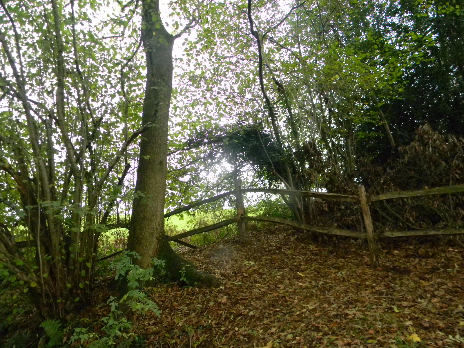 Sinuous fence Milford to Godalming