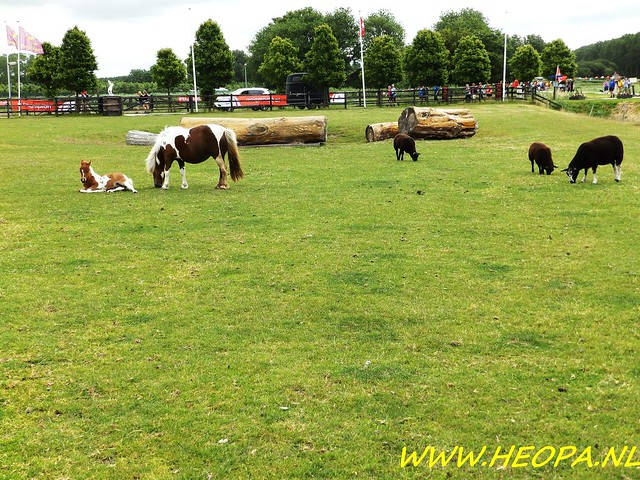 2016-06-18 Plus 4 daagse Alkmaar 4e dag 25 Km (53)
