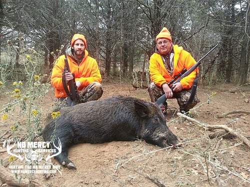 No Mercy Trophy Wild Boar Hunts | by No Mercy Hunting Services