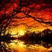 winter walk 3  -  sunset by Fr@ηk 