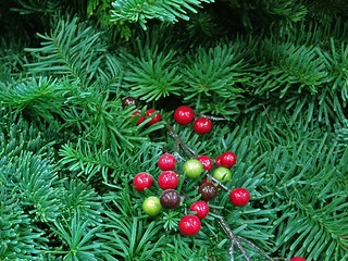 Christmas Greenery | by Accretion Disc