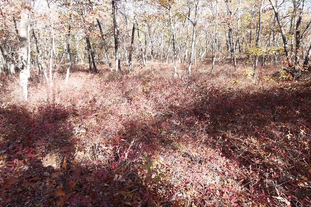 日, 2014-10-12 15:31 - Sterling Forest State Park