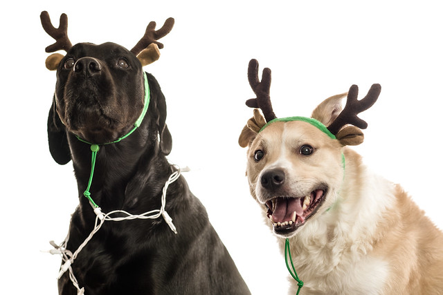 Bella and Romme were thrilled to have their Christmas photo taken!
