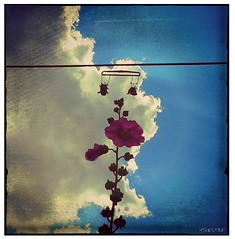 shoes tossing plant on line