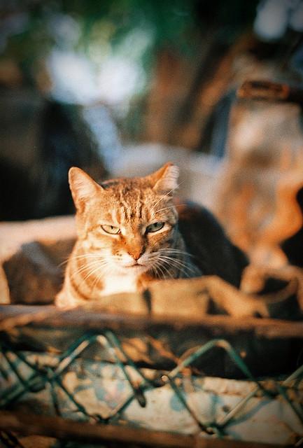 A street cat at Sundown