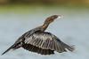 Little cormorant #122 by Ramakrishnan R - my experiments with light