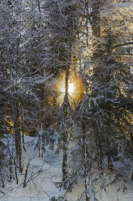 erikharstrom-Winter©2015-0041