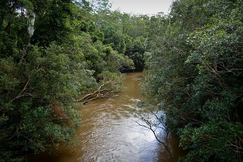 water river australia nsw myrtaceae clarencevalley orarariver northernrivers australianrivers tristaniopsislaurina watergum streamscape orararivervalley