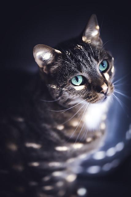 discocat
