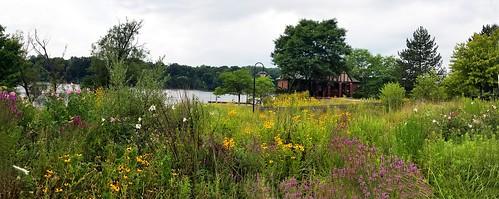 flowers newburgh lake hines park plymouth michigan