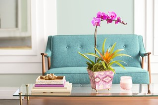 purple potted orchid and blue sofa 2 | by ProFlowers.com