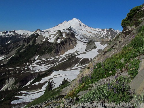 Mt. Baker from the Table Mountain Trail, Mount Baker-Snoqualmie National Forest, Washington
