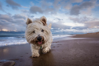 Baxter's Beach Adventure | by f22 Digital Imaging