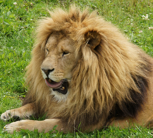 Yorkshire Wildlife Park 21.06.16 154
