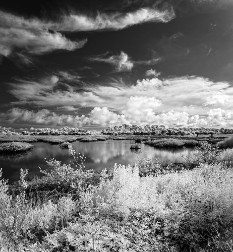 sky blackandwhite bw panorama usa cloud plant reflection tree water monochrome weather landscape ir unitedstates florida cloudy calm swamp infrared marsh centralflorida merrittislandnationalwildliferefuge minwr blackpointwildlifedrive bpwd edrosack