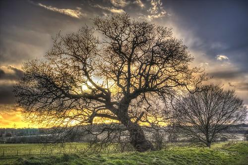 trees sunset sun oak norfolk norwich oaktree sunray caistorstedmunds tasvalley