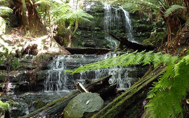 Myrtle Gully Falls, Wellington Park