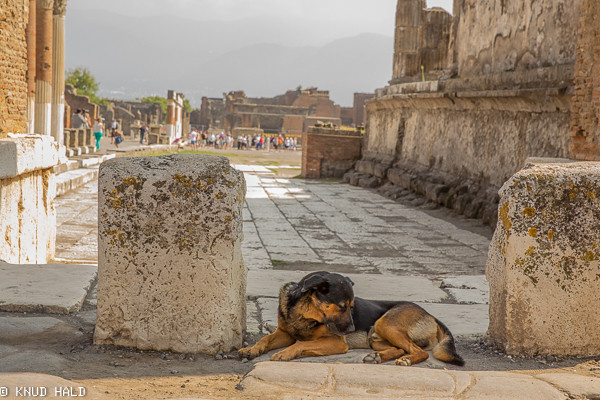 Dog in Pompei