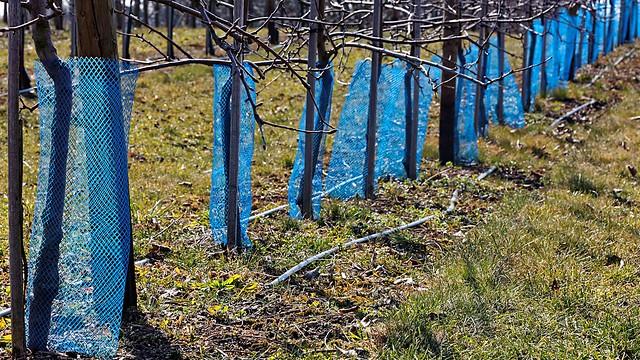 Spring in blue