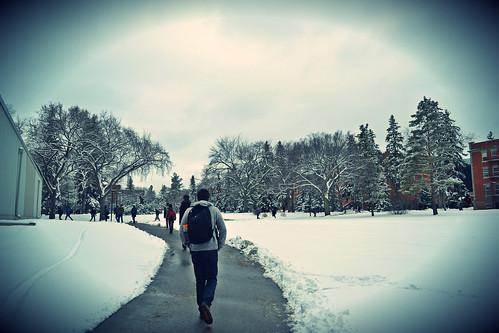 Winter walk in UAlberta quad