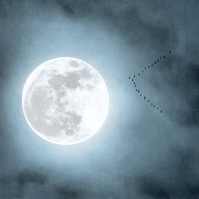 Nočne ptice #fullmoon #moon #oneinafuckingmilion