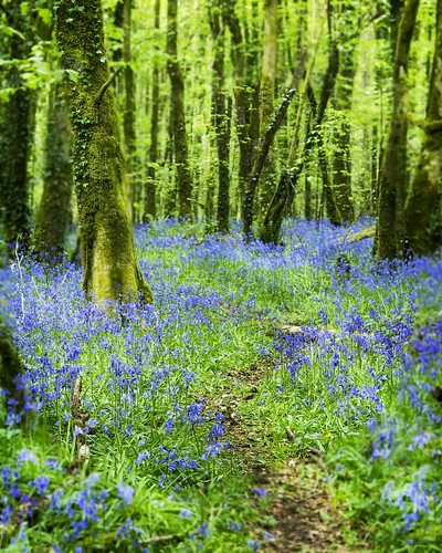 flower tree bell path trail bluebell
