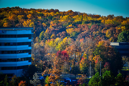 from autumn color fall colors virginia us office october colours view unitedstates va northern reston fireeye