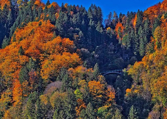 Autumn's bridge  DSC01867