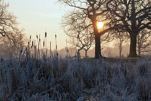 london epping eppingforest hollowpond water ice frost sunrise yellow pink