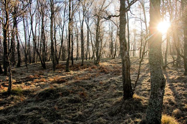 Through Ancient Woodland
