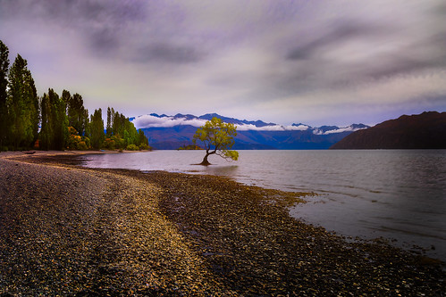 newzealand sky lake tree nature landscape media cloudy newspapers nz editorial southisland otago wanaka singletree lakewanaka onetree southernlakes queenstownlakes