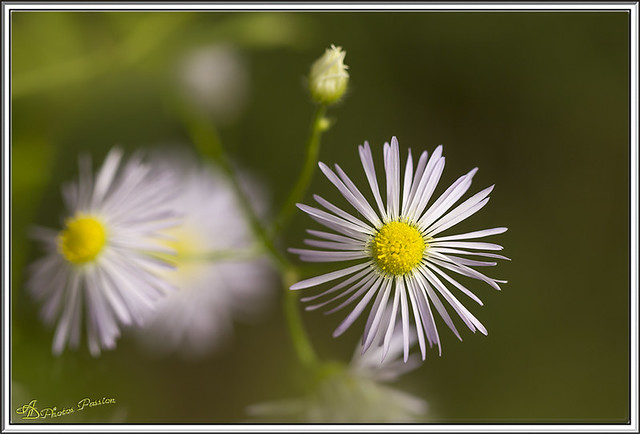 Petite fleur sauvage 01