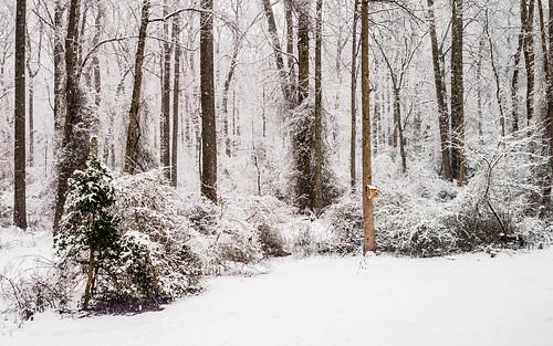 winter snow landscape newjersey medfordlandscape