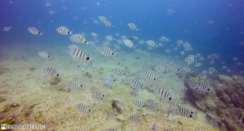 Cape Verde - 0003
