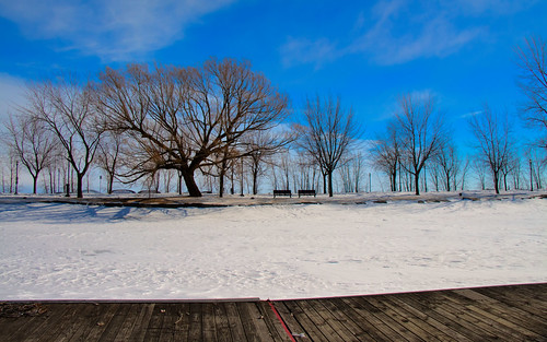 trees mars snow canon landscape march canal dock montréal arbres neige lachine paysage quai 2014 canallachine