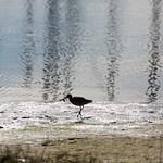 Bird food, Marina Park, Emeryville, CA