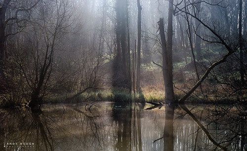 trees light england sunlight mist reflection water unitedkingdom sony rays complex wallingford a99 sonyalpha andyhough slta99v littlewittenhamwood andyhoughphotography tamronsp70200di